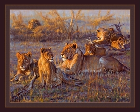 Afterglow East African Lion Pride John Banovich Digital Fabric Panel