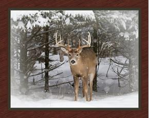 Winter Trophy Deer Buck in the Snowy Woods Digital Cotton Fabric Panel