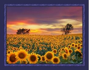 Sunset over Sunflowers Sunflower Field Digital Cotton Fabric Panel