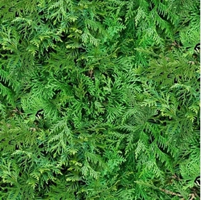 Landscape Medley Evergreen Foliage Arborvitae Thuja Cotton Fabric