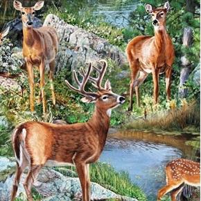 Wild Wings Cradle Rock Deer Scenic Buck Doe By Stream Cotton Fabric