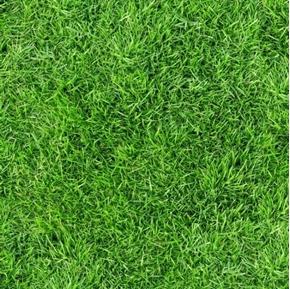 Open Air Grass Spring Green Lawn Turf Cotton Fabric