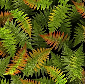 Open Air Ferns Foliage Nature Green Fern Plants Black Cotton Fabric