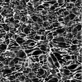 Open Air Pool Water Black and White Water Cotton Fabric