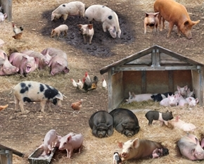 Farm Animals Pigs in Barnyard Pig Breeds Pot-bellied Cotton Fabric