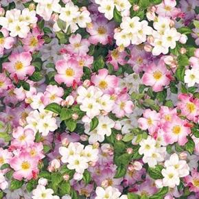 Hummingbird Garden Packed Floral Pink Dogwood Flowers Cotton Fabric