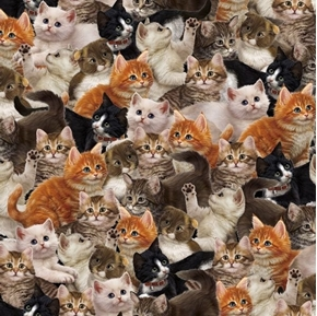 Literary Kitties Packed Kittens Various Breeds of Cats Cotton Fabric