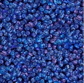 Fresh Blueberries Scrumptious Summer Berries Cotton Fabric