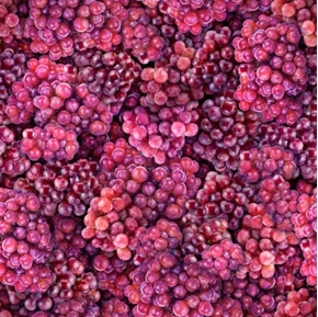 Fresh Grapes Red Grape Bunches Vineyard Fruit Cotton Fabric
