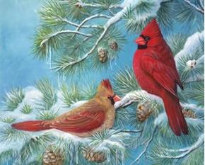 Winter Haven Cardinals in Pine Tree Digital Cotton Fabric Panel